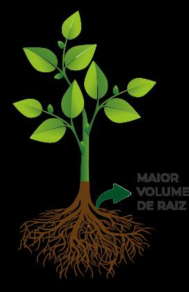MAIOR-VOLUME-DE-RAIZ-1.png